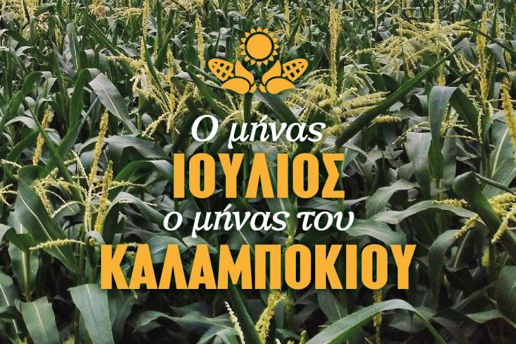 XALVATZI_FB_corn_JULY-02