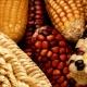 GEM_corn